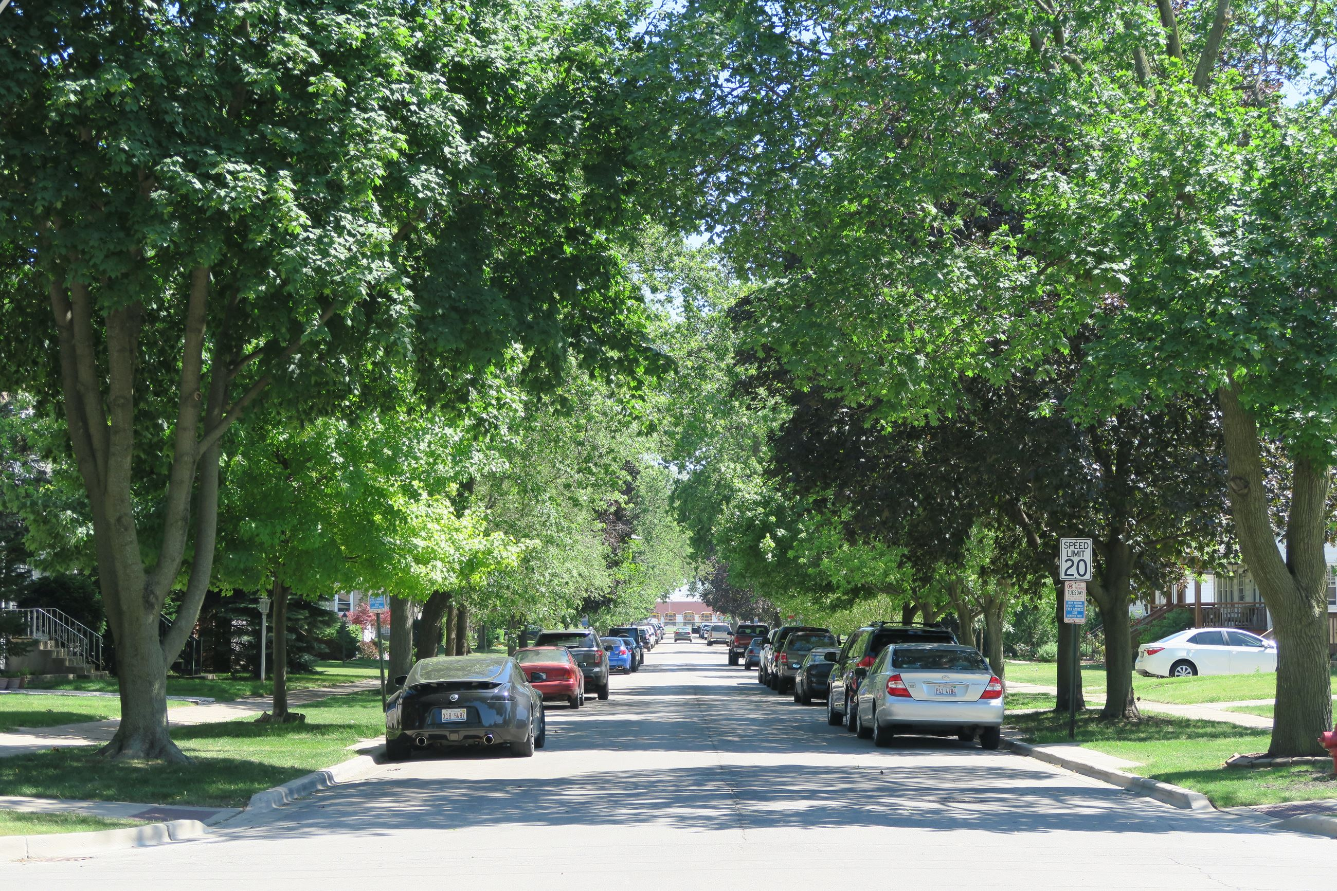 Shade covered street in summertime with cars parked along each side